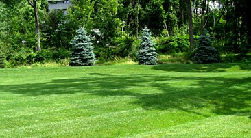 Organic Lawn Care Company in Millington, NJ