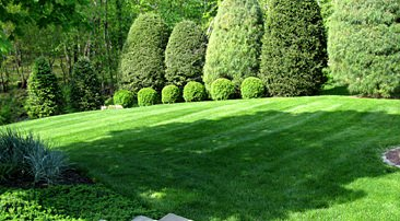 Organic Lawn Care & Maintenance