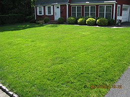 Organic Lawn Care in Madison, NJ