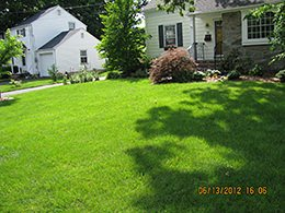 Organic Fertilizer and Lawn Care FAQs