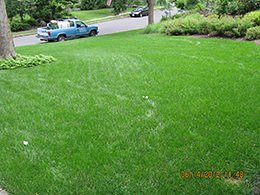 Short Hills Organic Lawn Care Service