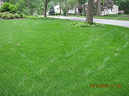 Basking Ridge Organic Lawn Care Company