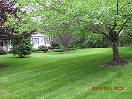Organic Lawn Care Service & Lawn Fertilizing