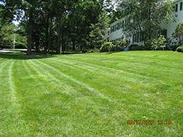 Organic Lawn Fertilizer Treatment in Millington, NJ