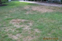 Complete Lawn Renovations