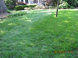 Organic Lawn Maintenance & Lawn Care Photos