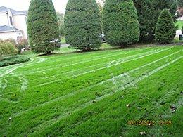 Organic Lawn Maintenance Photos in NJ